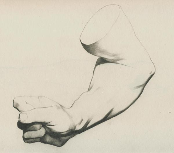 Plate I, 19 - Flexed forearm of a man, interior view