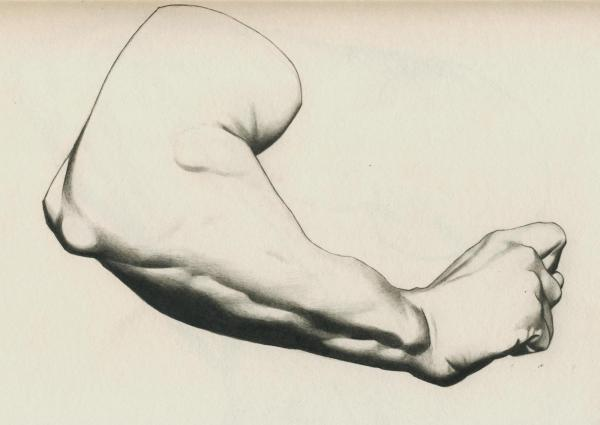 Plate I, 23 - Man's arm, bent: A timelapse video of this drawing is on youtube: